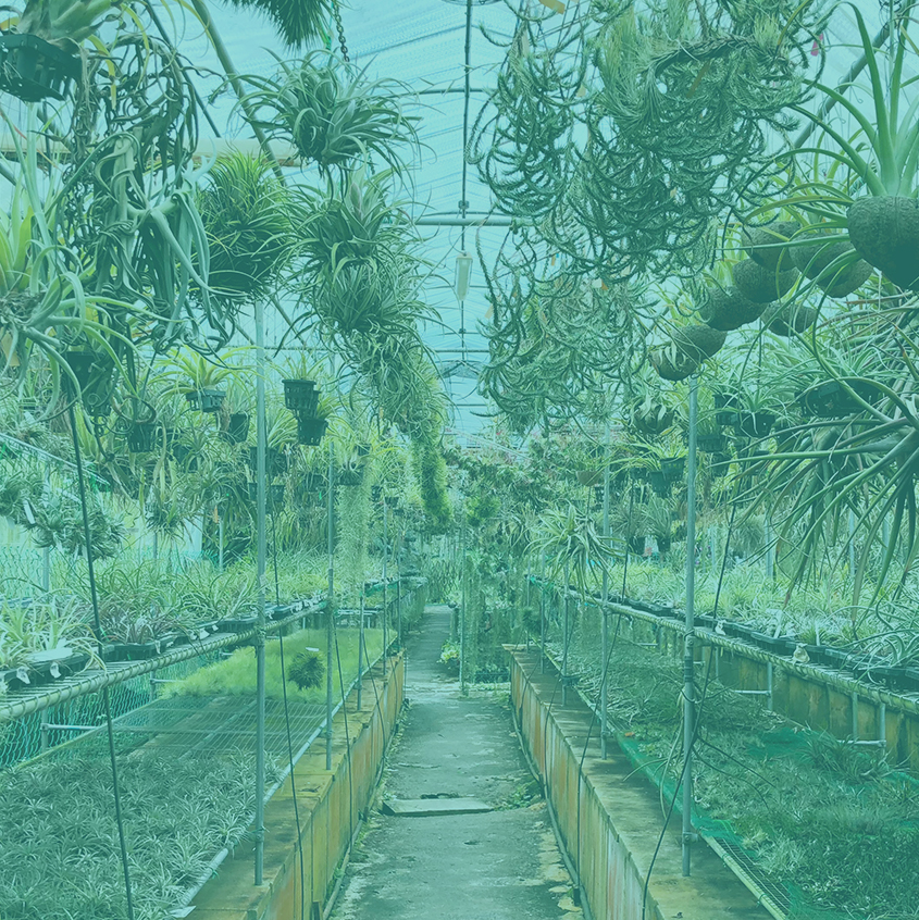 Air Plants – The Future of Home Gardens