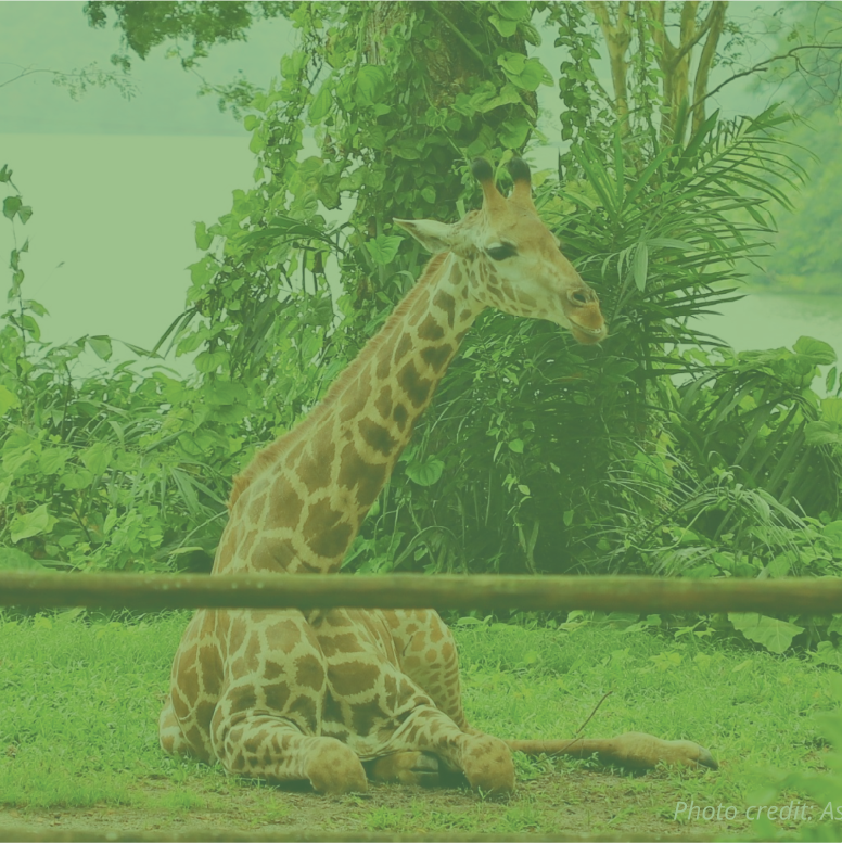 Zoo – Declassified!
